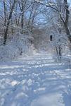 Winter in the Gordon Natural Area (25)