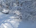 Winter in the Gordon Natural Area (26)