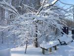 Winter in the Gordon Natural Area (27)