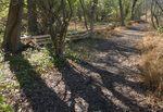Golden Ram Trail, Gordon Natural Area (3)