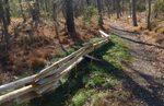 Golden Ram Trail, Gordon Natural Area (5)