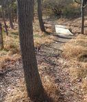 Golden Ram Trail, Gordon Natural Area (6)