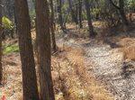 Golden Ram Trail, Gordon Natural Area (7)