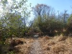 Golden Ram Trail, Gordon Natural Area (10)