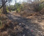 Golden Ram Trail, Gordon Natural Area (11)