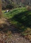 Golden Ram Trail, Gordon Natural Area (12)