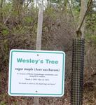 New Sign in the Gordon Natural Area: Wesley's Tree (1)