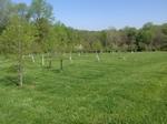 Tigue Hill Forest Restoration 3 by Gerard D. Hertel