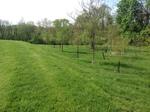 Tigue Hill Forest Restoration 4 by Gerard D. Hertel